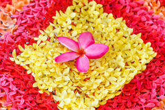 Orchid pink spa Royalty Free Stock Images