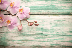 Orchid. Stock Photo