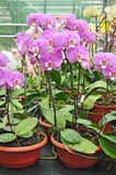 Orchid plant garden shop Stock Photos