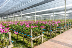 Orchid plant nursery Royalty Free Stock Image