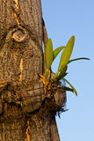 Orchid plant on tree Royalty Free Stock Photos