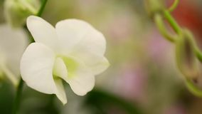 Orchid plantation garden farm business flower stock footage