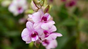 Orchid plantation garden farm business flower stock video footage