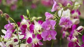 Orchid plantation garden farm business flower stock video