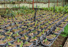 Orchid plants in a nursery Royalty Free Stock Photo