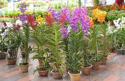 Orchid Plants Stock Image