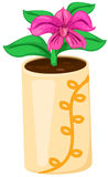 Orchid in a pot Stock Photos