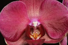 An orchid Stock Image