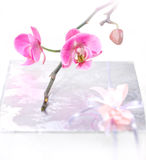 Orchid and present Royalty Free Stock Photography