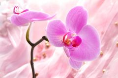 Orchid. Purple background with orchid and pearls Royalty Free Stock Image