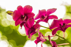 Orchid. Purple orchid blooming on the background bokeh Stock Photo