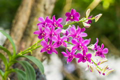 Orchid. Purple flowers blooming along the backdrop of the beautiful bokeh Stock Photos