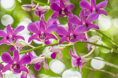 Orchid. Purple flowers blooming along the backdrop of the beautiful bokeh Stock Images