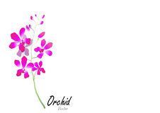 Orchid,purple orchid on white background,vector illustration Stock Photography