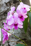 Orchid purple white Royalty Free Stock Image
