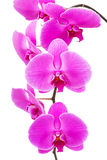 Orchid radiant flower Stock Images