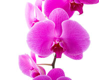 Orchid radiant flower Stock Photo