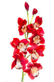 Orchid red artificial flower. Isolated on white background Stock Photo
