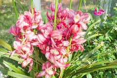 Orchid red speckled The name of The flower due to similarity of Royalty Free Stock Photography