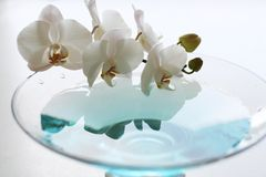 Orchid with reflection. Orchid close up over blue water in glass vase Stock Image