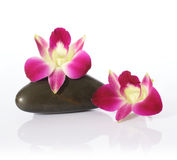 Orchid and River Stones Royalty Free Stock Photos