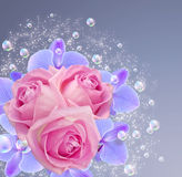 Orchid, roses and bubbles Stock Images
