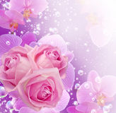 Orchid, roses and bubbles. Card with roses, orchid and bubbles Royalty Free Stock Photos