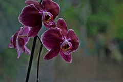 Orchid. It's home flower, so beautiful that i don't have the words Royalty Free Stock Images