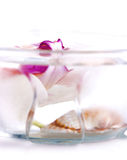 Orchid in a saucer with water Stock Photo