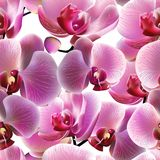 Orchid seamless pattern. Vector, EPS10 Stock Image