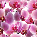 Orchid seamless pattern. Vector, EPS10 Royalty Free Stock Image