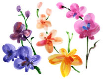 Orchid set Royalty Free Stock Photo
