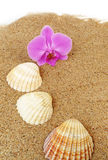 orchid and shells Royalty Free Stock Photography