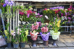 Orchid shop Royalty Free Stock Photography