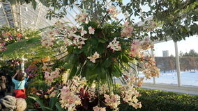 The 2015 Orchid Show: Chandeliers 179 Royalty Free Stock Images
