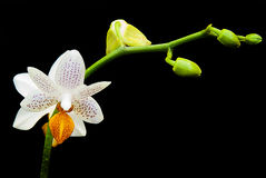 Orchid. Show in London 2015 royalty free stock photo