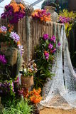Orchid Show Stock Photography