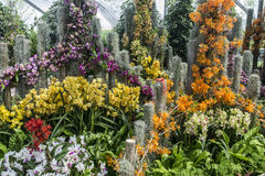 Orchid Show Royalty Free Stock Images
