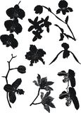 Orchid silhouettes collection Stock Photo