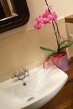 Orchid Sink Royalty Free Stock Photo