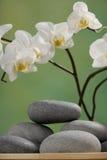 orchid spa πέτρες Στοκ Φωτογραφία