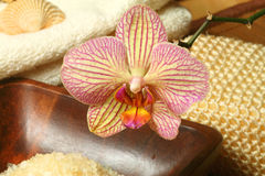 Orchid spa Stock Images