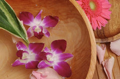 Orchid Spa. Orchids on wood with bamboo and a gerbera daisy Royalty Free Stock Image