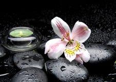 Orchid spa bericht Royalty-vrije Stock Afbeeldingen
