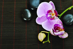 Orchid Spa Composition Royalty Free Stock Photo