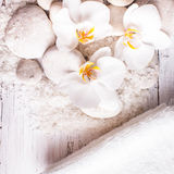 Orchid spa concept Royalty Free Stock Image