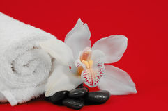 Orchid Spa Display. Setup of towels, spa rocks and a white orchid Stock Photos