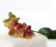 Orchid in spa setting Stock Photo