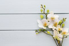 Beauty orchid on a gray background. Spa scene. Orchid and spa stones on a stone background. Spa and wellnes scene Royalty Free Stock Photo