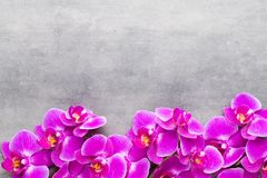 Beauty orchid on a gray background. Spa scene. Orchid and spa stones on a stone background. Spa and wellnes scene Royalty Free Stock Photos